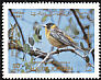 Black-headed Bunting Emberiza melanocephala  1987 Birds