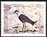Spur-winged Lapwing Vanellus spinosus  1987 Birds