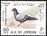 Rock Dove Columba livia  1988 Birds