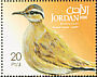 Cream-colored Courser Cursorius cursor  2009 Birds