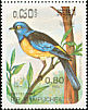 Blue-and-yellow Tanager Thraupis bonariensis  1985 Argentina 85
