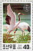 Red-crowned Crane Grus japonensis