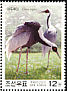 White-naped Crane Antigone vipio