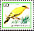 Black-naped Oriole Oriolus chinensis  1986 Birds