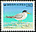 Little Tern Sternula albifrons  1994 Definitives