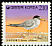 Little Tern Sternula albifrons  1995 Definitives