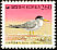 Little Tern Sternula albifrons  1997 Definitives