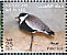 Spur-winged Lapwing Vanellus spinosus  2002 The Scientific Center of Kuwait 13v sheet