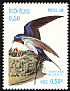 Barn Swallow Hirundo rustica  1982 Birds