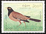 Common Myna Acridotheres tristis  1995 Birds