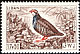 Red-legged Partridge Alectoris rufa  1965 Birds