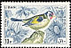 European Goldfinch Carduelis carduelis  1965 Birds