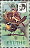 Cape Robin-Chat Cossypha caffra  1981 Birds Booklet