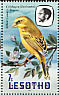 Yellow Canary Crithagra flaviventris  1981 Birds Booklet