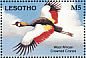Grey Crowned Crane Balearica regulorum  1993 Earth Summit 92