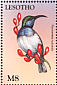 White-bellied Sunbird Cinnyris talatala  1998 Fauna and flora of the world