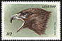 Red-tailed Hawk Buteo jamaicensis  1999 Birds of the world