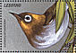 Chestnut-flanked White-eye Zosterops erythropleurus  1999 Birds of the world