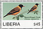 Black-winged Oriole Oriolus nigripennis  2007 Birds of Africa Sheet