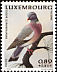 Common Wood Pigeon Columba palumbus