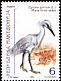Little Egret Egretta garzetta  2000 Birds