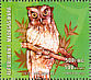 Tropical Screech Owl Megascops choliba