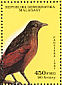 Malagasy Coucal Centropus toulou  1987 Endangered animals