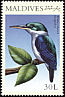 Collared Kingfisher Todiramphus chloris