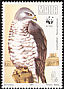 European Honey Buzzard Pernis apivorus