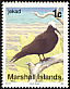 Black Noddy Anous minutus