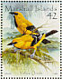Yellow Oriole  Icterus nigrogularis
