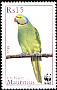 Echo Parakeet Psittacula eques