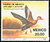 Black-bellied Whistling Duck Dendrocygna autumnalis