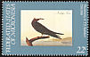 Brown Noddy Anous stolidus  1985 Audubon