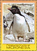 Southern Rockhopper Penguin Eudyptes chrysocome  2007 Penguins Sheet