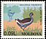 Common Moorhen Gallinula chloropus  1996 Birds
