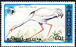 White-naped Crane Grus vipio