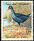 Purple Swamphen Porphyrio porphyrio