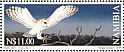 Western Barn Owl Tyto alba  1999 Stamp world cup winning design