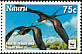 Great Frigatebird Fregata minor