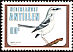 Tropical Mockingbird Mimus gilvus  1980 Birds