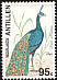 Indian Peafowl Pavo cristatus  1994 Birds