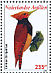 Ringed Woodpecker Celeus torquatus  2009 Birds Sheet