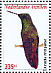 Green-bellied Hummingbird Amazilia viridigaster  2009 Birds Sheet