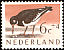 Eurasian Oystercatcher Haematopus ostralegus  1961 Cultural and social relief fund