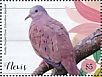 Ruddy Ground Dove Columbina talpacoti