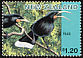 Huia Heteralocha acutirostris �  1996 Extinct birds