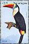 White-throated Toucan Ramphastos tucanus
