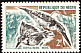 Pied Kingfisher Ceryle rudis  1967 Birds