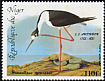 Black-necked Stilt Himantopus mexicanus  1985 Audubon